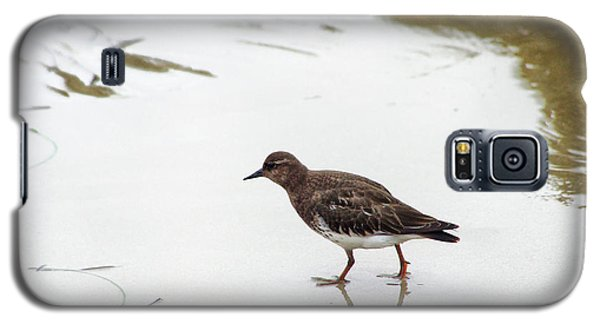 Galaxy S5 Case featuring the photograph Bird Walking On Beach by Mariola Bitner
