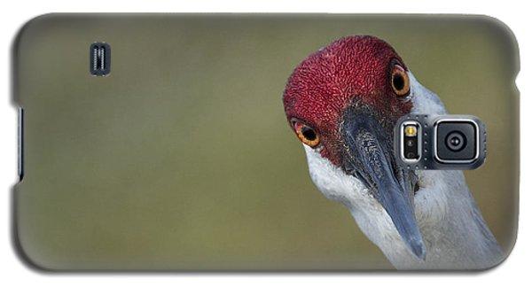 Bird Watching Galaxy S5 Case by Elizabeth Eldridge