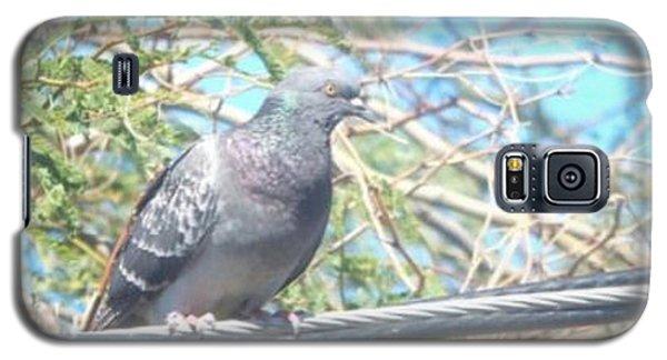 Bird Watchman Galaxy S5 Case