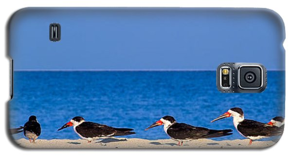 Birdline Galaxy S5 Case