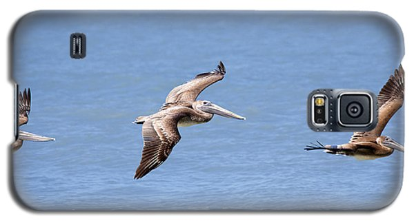 Birds 1039 Galaxy S5 Case