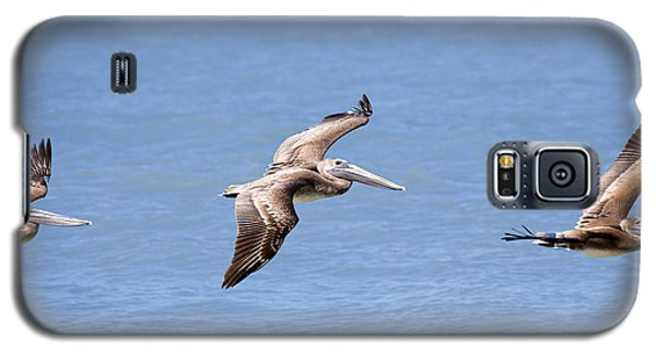 Birds 1039 Galaxy S5 Case