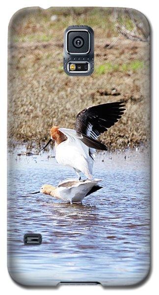 Birds Do It Galaxy S5 Case