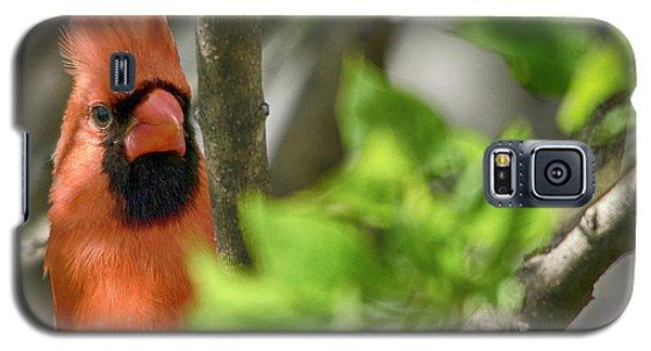 Bird's Eye Galaxy S5 Case