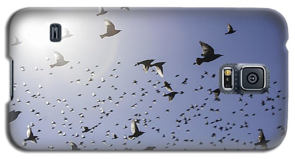 Birds Galaxy S5 Case by Lynn Geoffroy