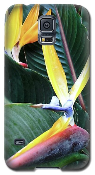 Birds Of Paradise With Leaves Galaxy S5 Case