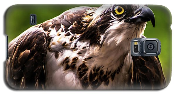 Birds Of Prey Sonoma County Galaxy S5 Case