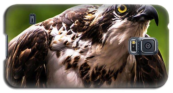 Birds Of Prey Sonoma County Galaxy S5 Case