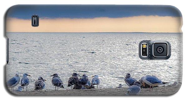 Birds On A Beach Galaxy S5 Case