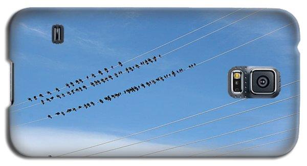Birds On Wires Galaxy S5 Case