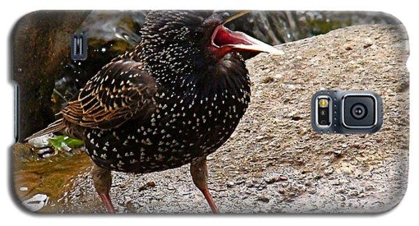 Birdsong Galaxy S5 Case