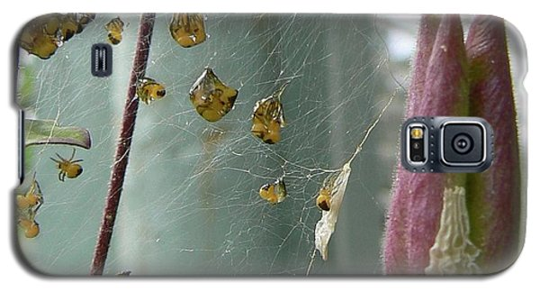 Birth Of A Spider Galaxy S5 Case by Pamela Patch