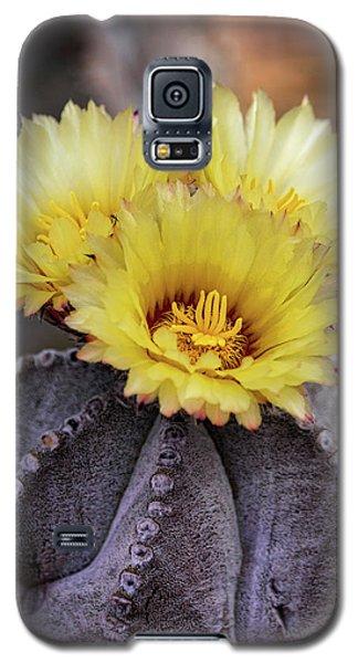 Galaxy S5 Case featuring the photograph Bishop's Cap Cactus  by Saija Lehtonen
