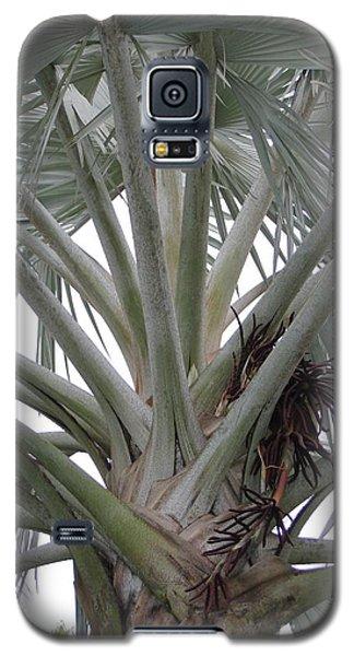Bismark Palm Galaxy S5 Case by Dodie Ulery