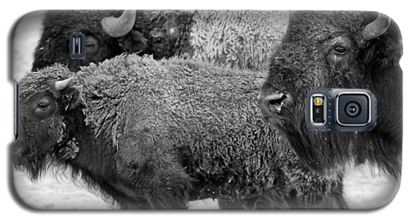 Bison - Way Out West Galaxy S5 Case by Melany Sarafis
