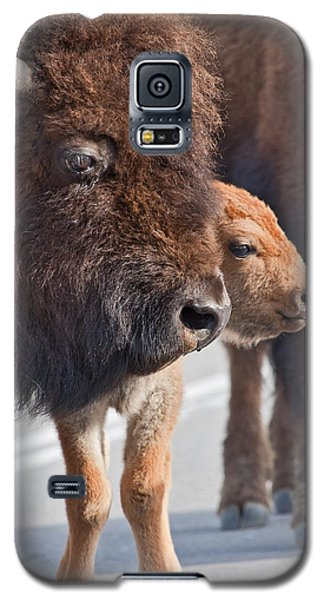 Bison And Calf Galaxy S5 Case