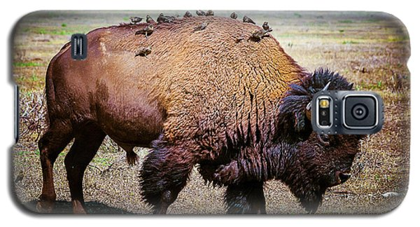 Galaxy S5 Case featuring the photograph Bison And The Birds by Mary Hone