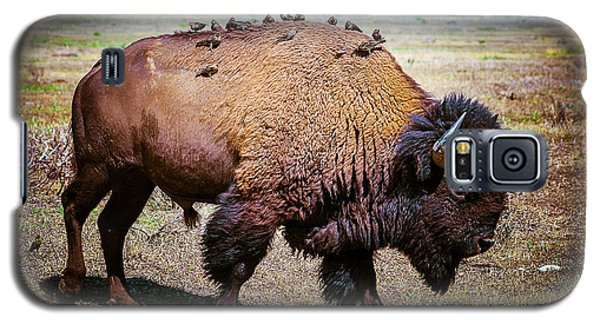 Bison And The Birds Galaxy S5 Case by Mary Hone