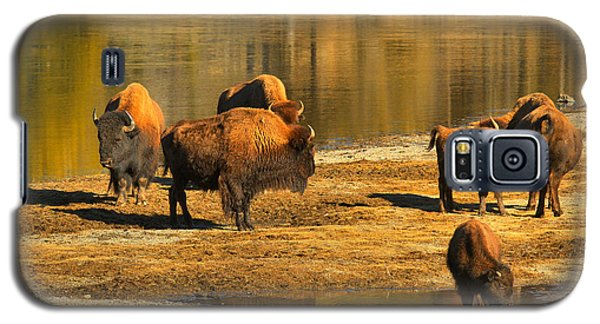 Galaxy S5 Case featuring the photograph Bison Family Crossing by Adam Jewell