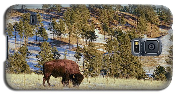 Bison In Custer State Park Galaxy S5 Case
