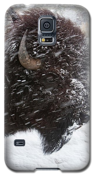 Bison In Snow Galaxy S5 Case