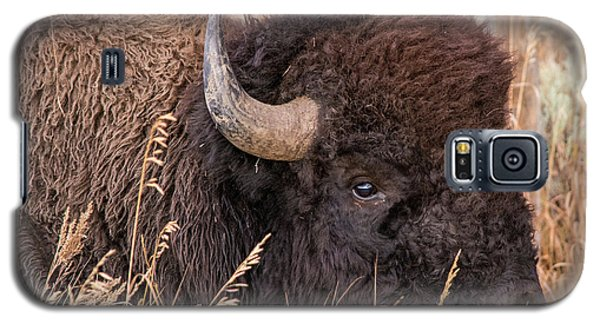 Galaxy S5 Case featuring the photograph Bison In The Grass by Mary Hone