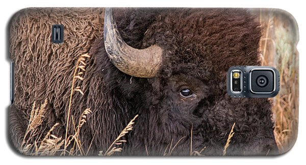 Bison In The Grass Galaxy S5 Case by Mary Hone