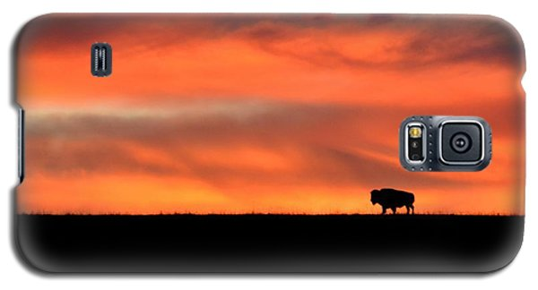 Bison In The Morning Light Galaxy S5 Case