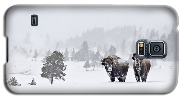 Galaxy S5 Case featuring the photograph Bison In The Snow by Gary Lengyel