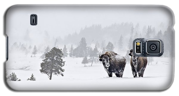 Bison In The Snow Galaxy S5 Case by Gary Lengyel