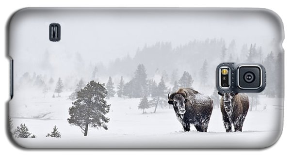Bison In The Snow Galaxy S5 Case