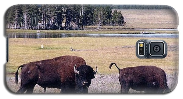 Bison In Yellowstone Galaxy S5 Case