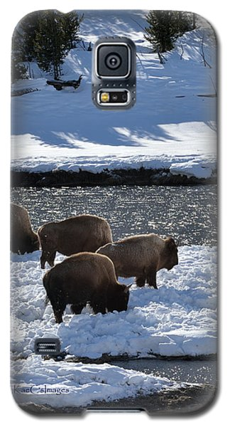 Galaxy S5 Case featuring the photograph Bison On River Strand by Kae Cheatham