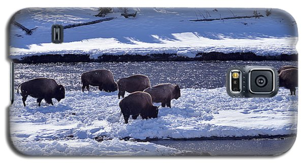 Bison On River Strand Landscape Galaxy S5 Case