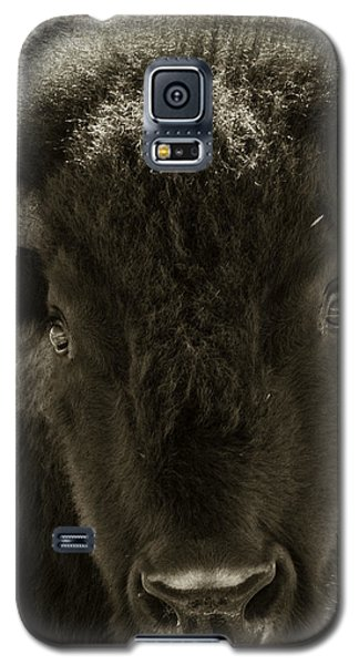 Bison Surprise Galaxy S5 Case by Elizabeth Eldridge