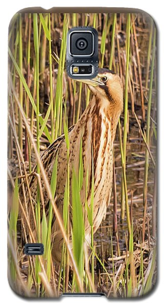 Bittern In The Reeds Galaxy S5 Case