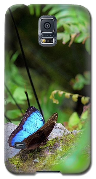 Black And Blue Butterfly Galaxy S5 Case