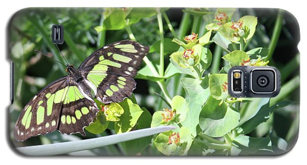 Black And Green Butterfly Galaxy S5 Case