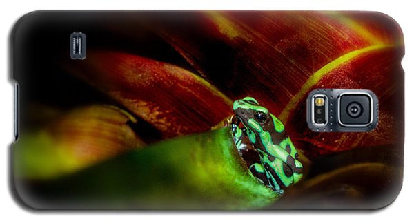 Galaxy S5 Case featuring the photograph Black And Green Dart Frog In The Red Bromeliad by Rikk Flohr