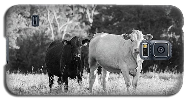 Black And White Cows Galaxy S5 Case