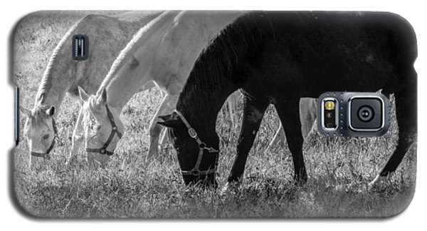 Galaxy S5 Case featuring the photograph Black And White Horse Trio Grazing by Eleanor Abramson