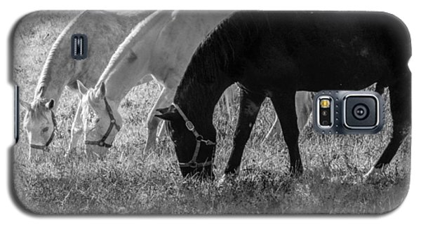 Black And White Horse Trio Grazing Galaxy S5 Case by Eleanor Abramson