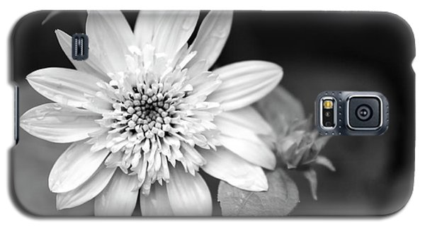 Galaxy S5 Case featuring the photograph Black And White Sunrise Coreopsis by Christina Rollo