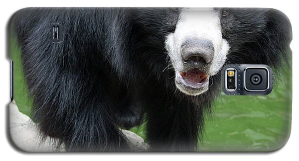 Sun Bear Galaxy S5 Case