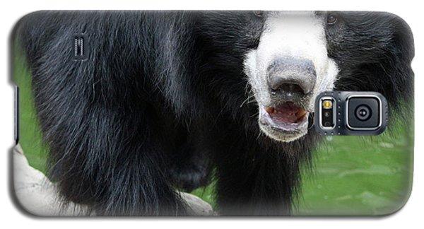 Sun Bear Galaxy S5 Case