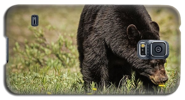Black Bear Galaxy S5 Case