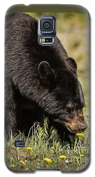 Black Bear Galaxy S5 Case