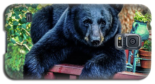 Black Bear - Chilled Out Galaxy S5 Case by Marilyn Burton