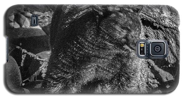 Black Bear Creekside Galaxy S5 Case