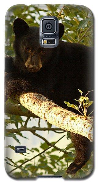 Black Bear Cub Resting On A Tree Branch Galaxy S5 Case by Max Allen